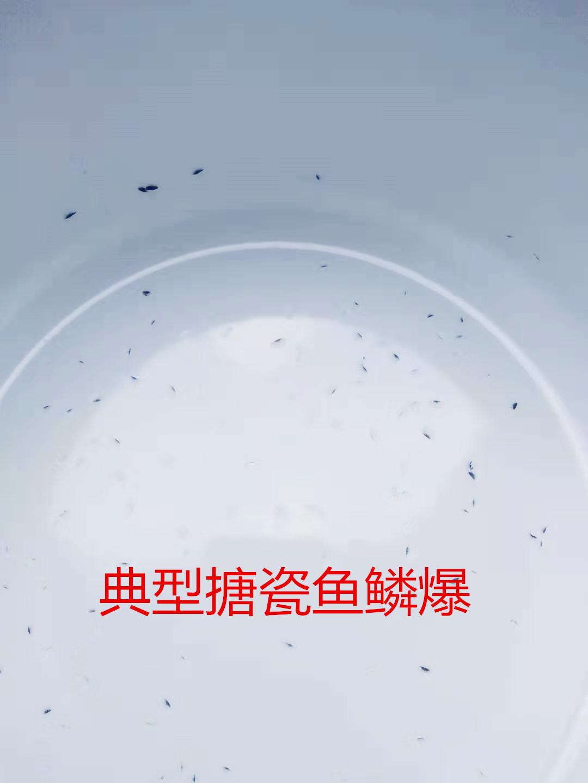 典型亚博体育app苹果下载鱼鳞爆